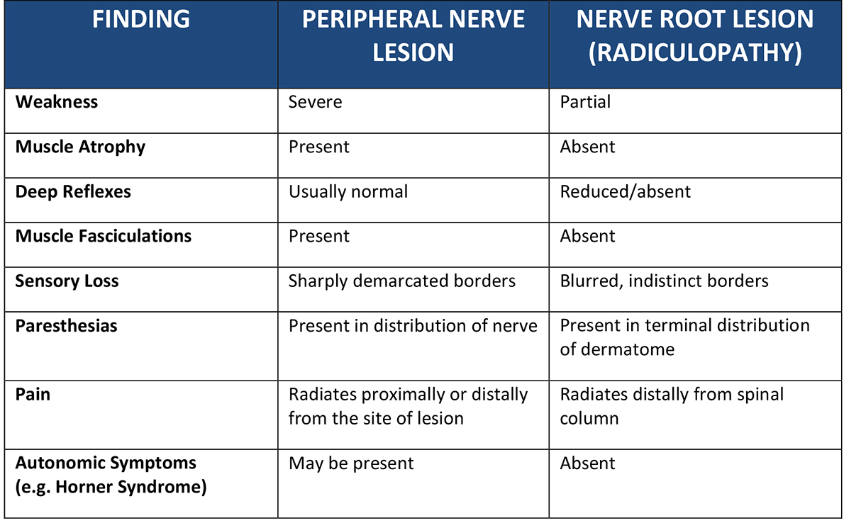 for nurse practitioners / physician assistants | brachial plexus, Muscles