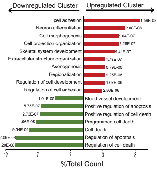 Whole Genome Analysis of Differentially Expressed Genes in Tumors Refractory to Treatment