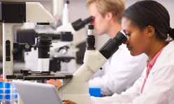 Researchers using microscopes in lab