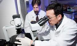 University of Michigan Peter Arvan diabetes research