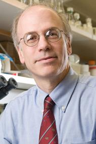 David Fox, MD