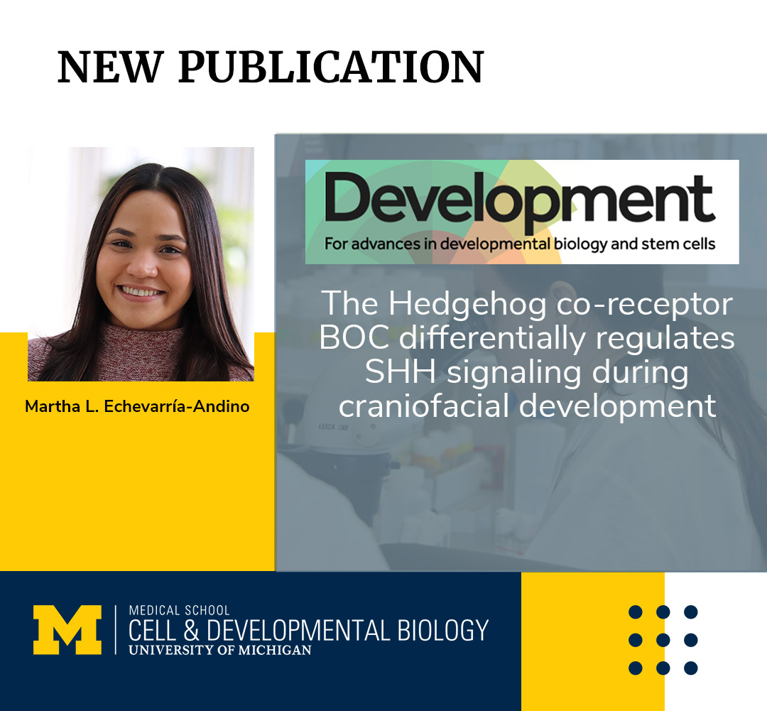 Martha L. Echevarría-Andino CDB PhD umichCDB