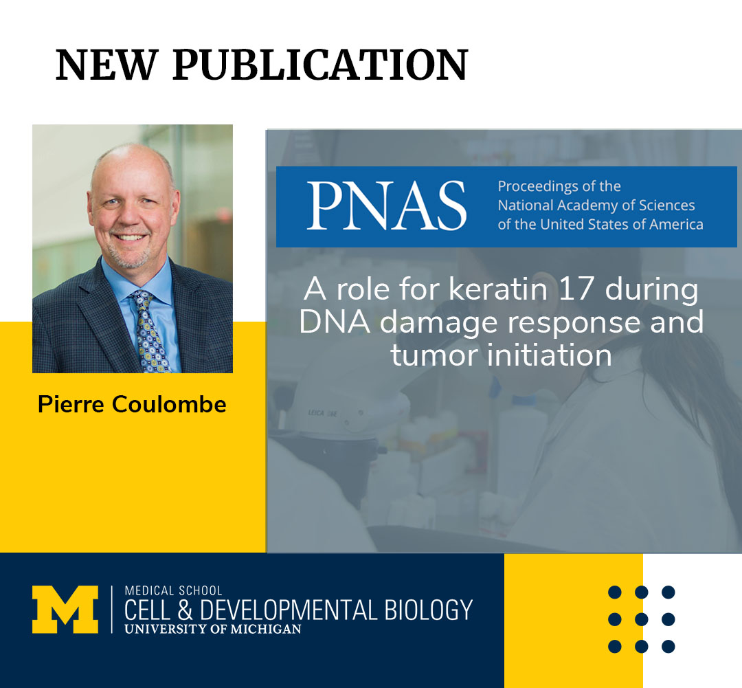 Coulombe Lab publication CDB research