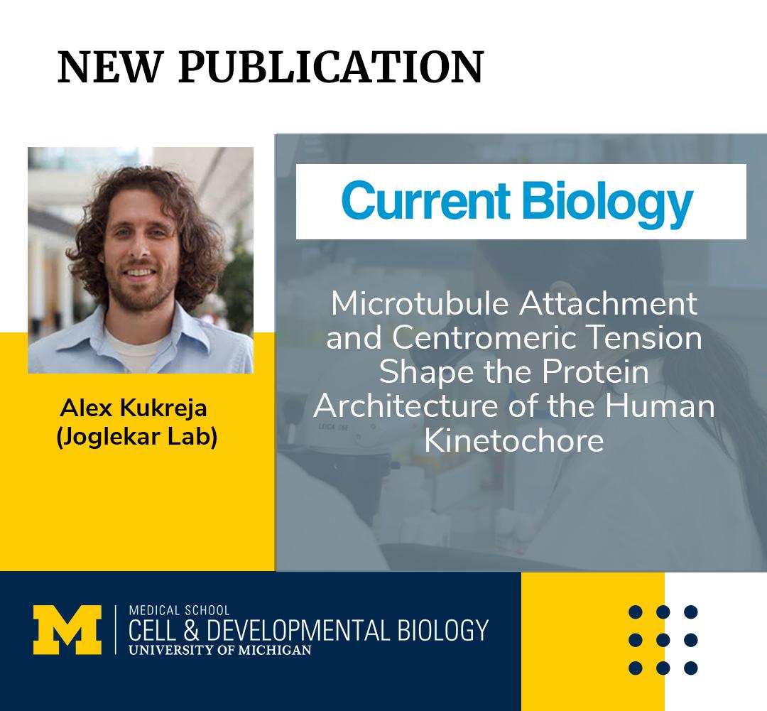 alex kurkeja, CDB research