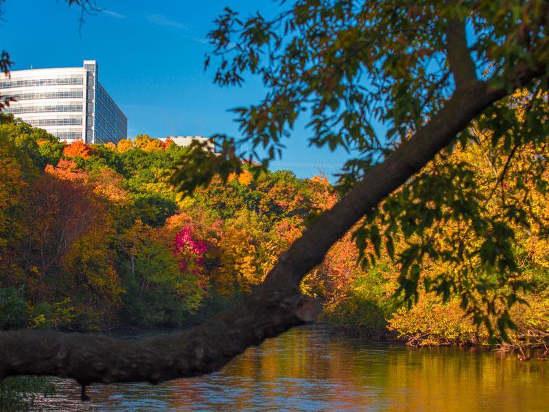 Ann Arbor Arboretum River