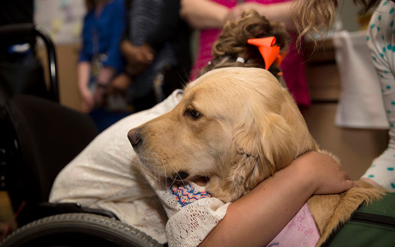 Therapy dog comforts a young patient