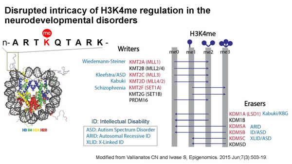 Disrupted intricacy of H3K4me regulation in neurodevelopmental disorders