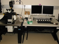 Leica SP5 Confocal TCS Microscope