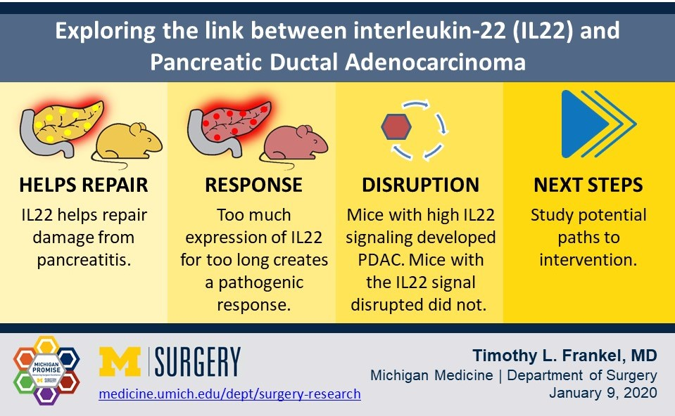 Visual abstract of study findings