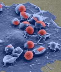 Host-Pathogen Interactions Initiative