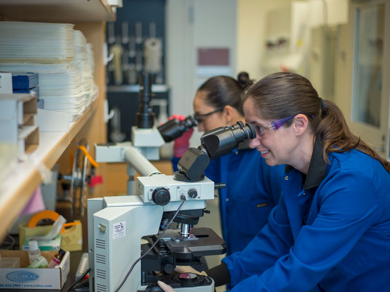 Catherine Ptaschinski, Ph.D., works on a microscope with a fellow researcher