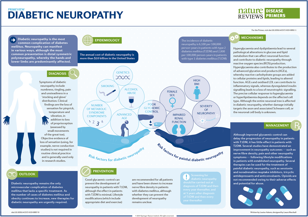 Dr. Eva Feldman's Diabetic Neuropathy PrimeView from her article in Nature Reviews Disease Primers