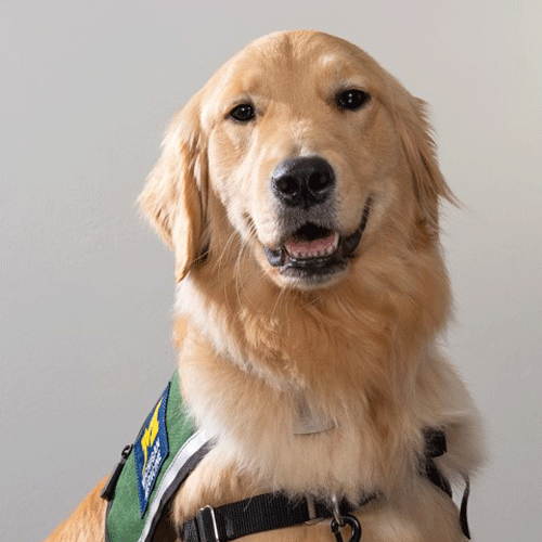 Fawn is the hospital dog working with the Stepping Stones Pediatric Palliative Care Program.