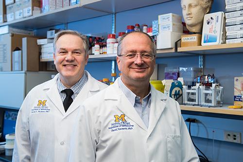 Steven Abcouwer, PhD, and David Antonetti, PhD
