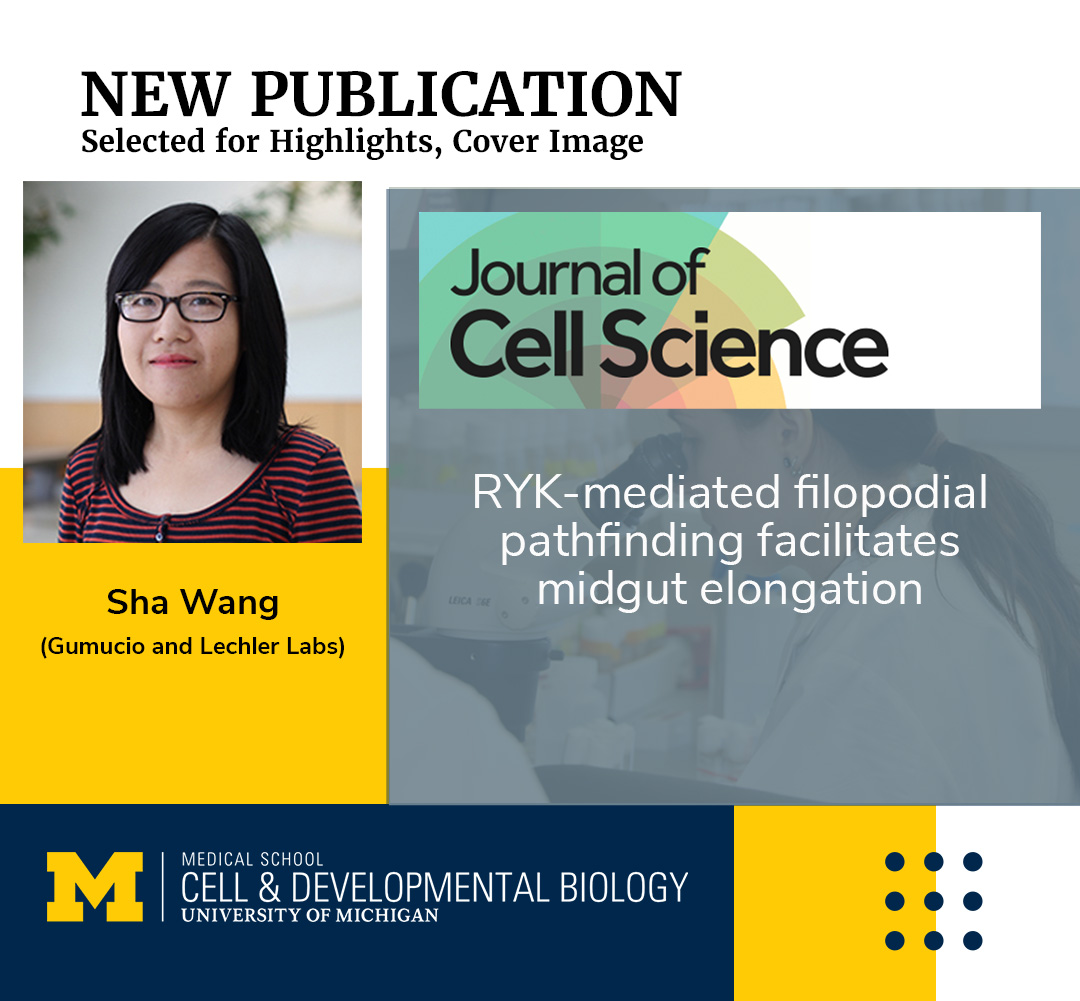 Sha Wang CDB research