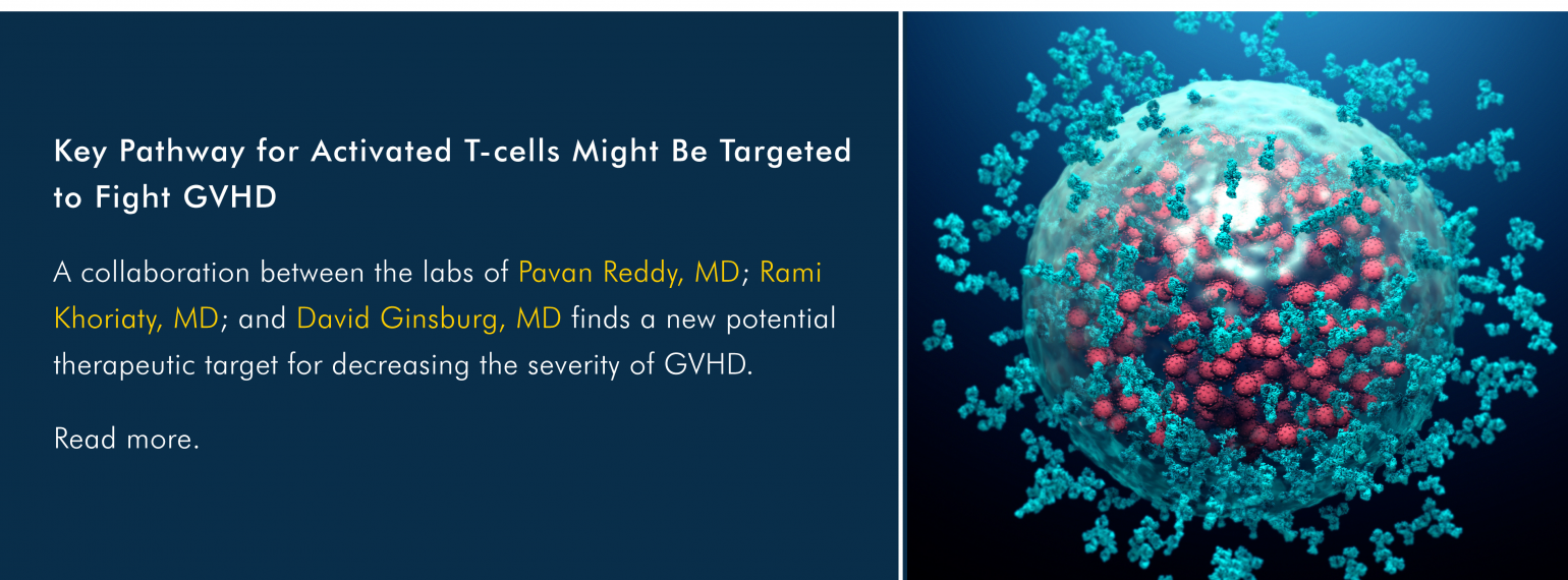 Key Pathway for Activated T-cells Might Be Targeted to Fight GVHD