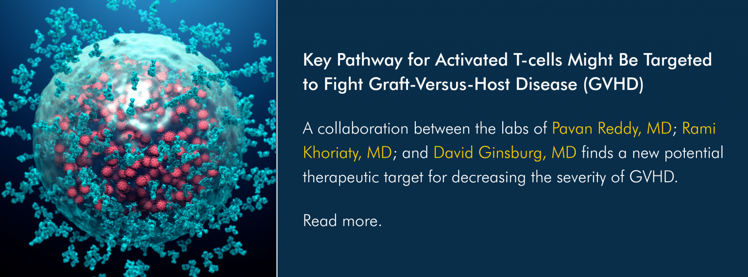 Key Pathway for Activated T-cells Might Be Targeted to Fight Graft-Versus-Host Disease (GVHD)
