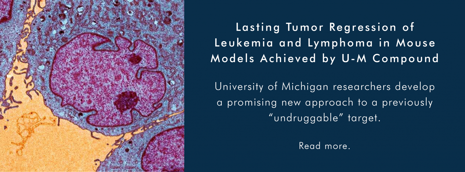 Lasting Tumor Regression of Leukemia and Lymphoma in Mouse Models Achieved by U-M Compound