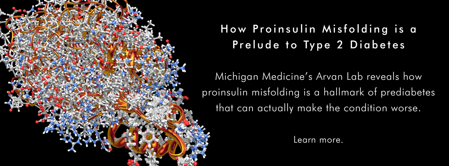 Michigan Medicine's Arvan Lab Reveals How Proinsulin Misfolding is a Prelude to Type 2 Diabetes