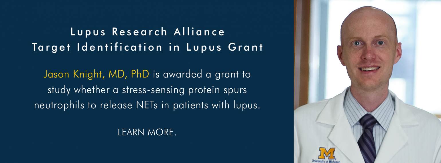 Dr. Jason Knight Receives Lupus Research Alliance Target Identification in Lupus Grant
