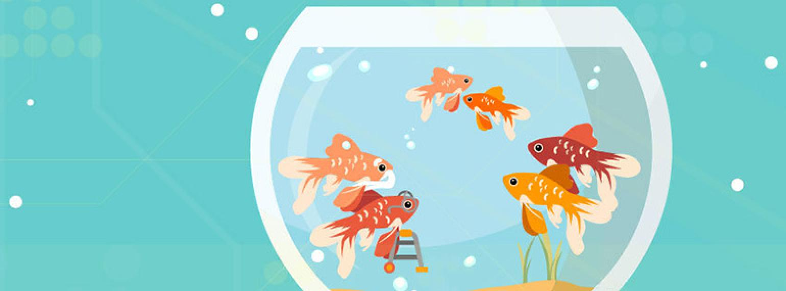 Images of fish in a fish bowl