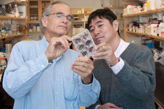 Dr. Platt and Lab Member