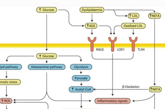 Diabetic Neuropathy: What Does the Future Hold graphic