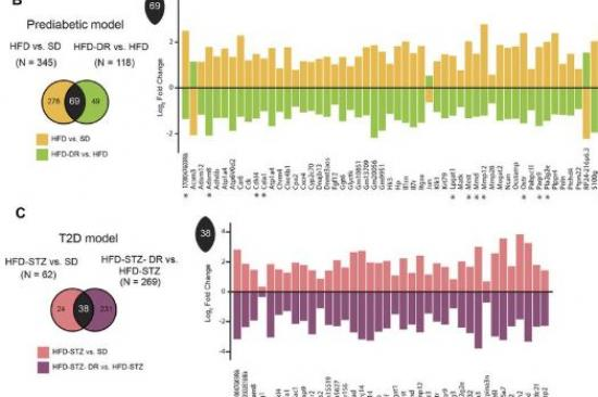 Integrated Lipidomic and Transcriptomic Analyses Identify Altered Nerve Triglycerides in Mouse Models of Prediabetes and Type 2 Diabetes Graphic