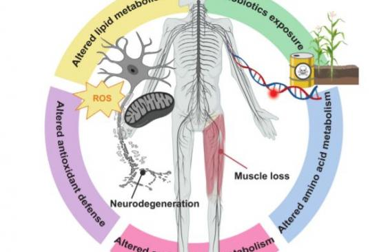 Untargeted metabolomics yields insight into ALS disease mechanisms Portfolio Image