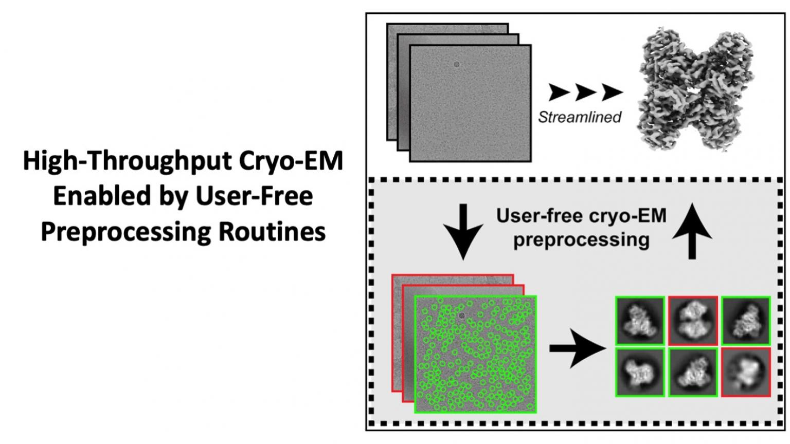 High-throughput cryo-EM enabled by user-free preprocessing routines