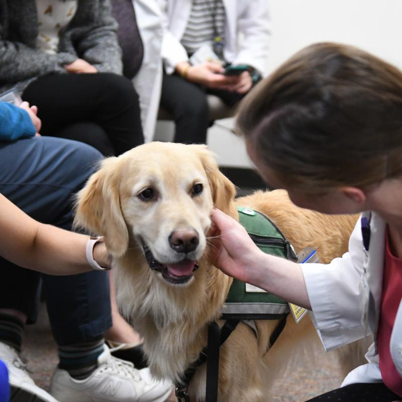 Anna the Paws4Patients facility dog cheers up employees and patients during her days at Michigan Medicine.