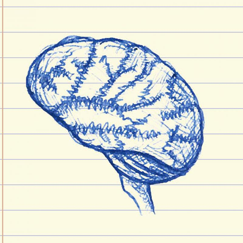 Illustration of a brain drawn on a background that looks like a yellow legal pad of paper.