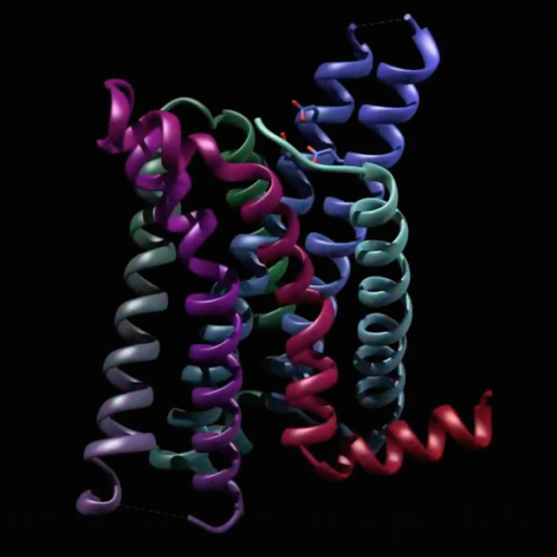 Discovery of Protein's Configuration Could Lead to More Effective Anti-Obesity Treatments