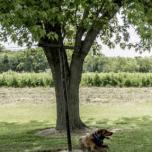 Dog sitting under a tree
